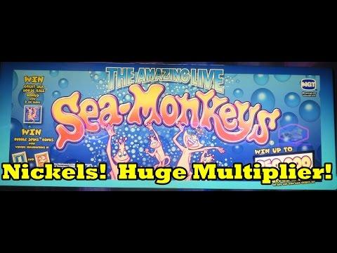 Raging Rhino Slot - Bonus Guarantee Be Gone! Big Win! from YouTube · Duration:  2 minutes 23 seconds  · 10000+ views · uploaded on 02/03/2014 · uploaded by Shinobi Slots - SoCal Slot Machine Videos