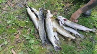 на рыбалке....ловлю  на  кружки....