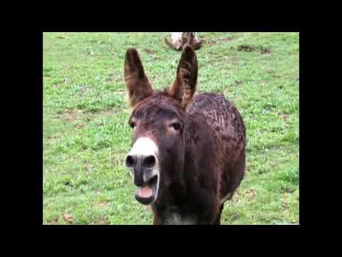 Fuzzy Donkey Man