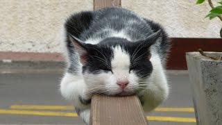 Кошка бежит когда спит