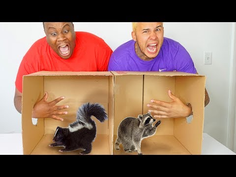 WHAT'S IN THE BOX CHALLENGE !? (ANIMALS)
