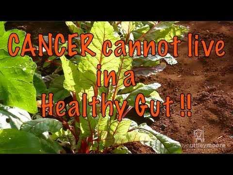 Cancer Cannot Live in a Healthy Gut