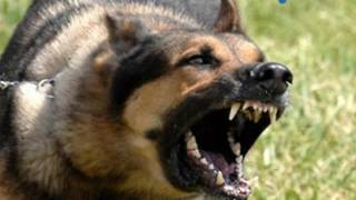نباح الكلاب - اصوات الكلاب