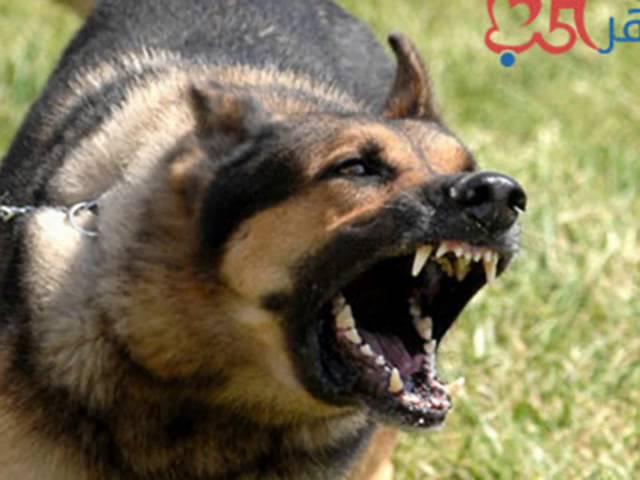 نباح الكلاب اصوات الكلاب Youtube