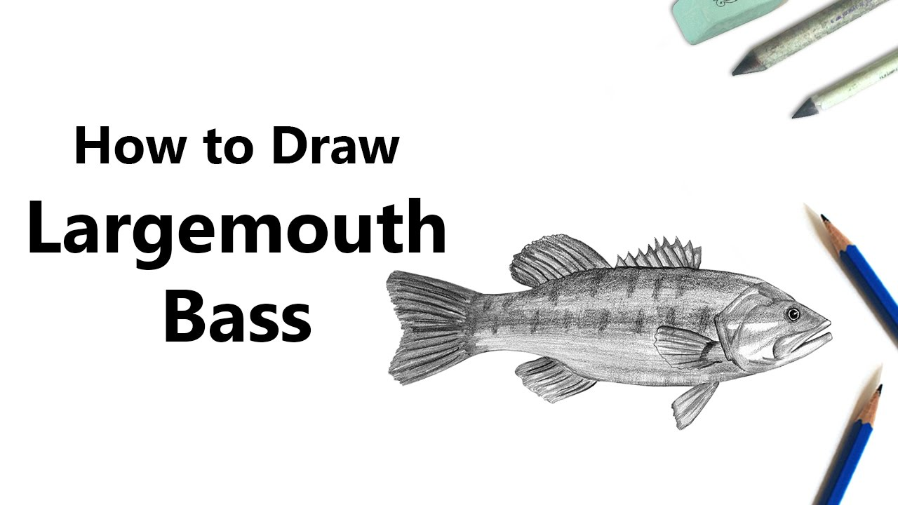 How To Draw A Largemouth Bass With Pencils Time Lapse Youtube
