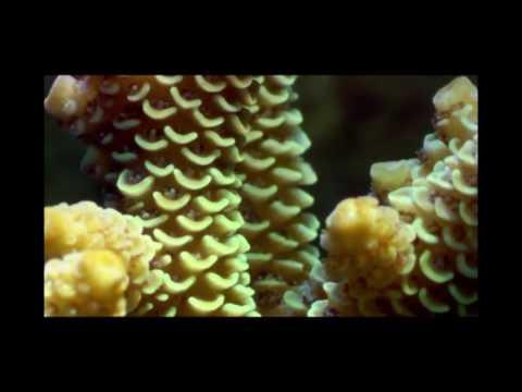 barrier reef sound scape Foley