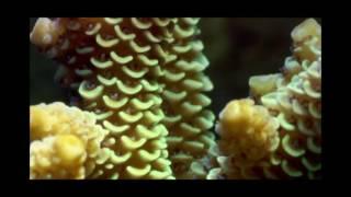 barrier reef sound scape (Foley)
