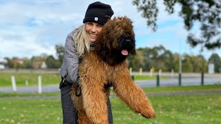 Dog Tricks with Frankie the Briard and owner Justyna