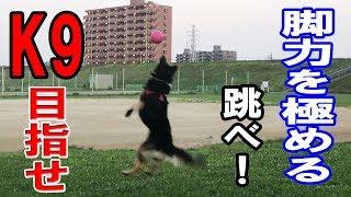 grandchild and German Shepherd dog 警察犬ドラマK9を目標に日々楽しく...