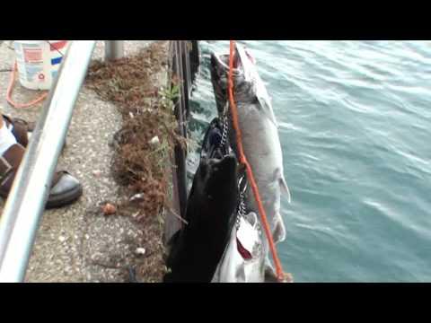 Fishing Port Huron Michigan