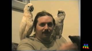 Из архива семьи Левашовых... Николай и Светлана... 1994 г. Сан-Франциско.(Уважаемые Читатели! Это видео смонтировано из архивов семьи Левашовых и впервые было показано 13 ноября..., 2016-11-15T05:03:41.000Z)