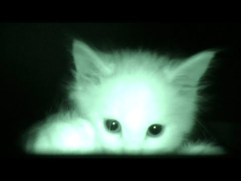 What Kittens Do At Night...