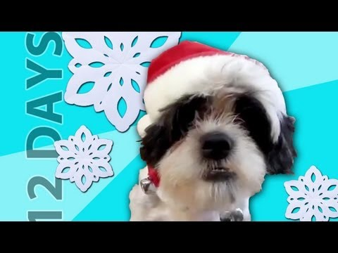 Animals Sing 12 Days of Christmas