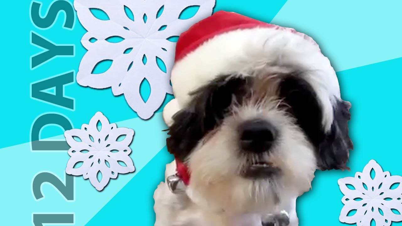 animals sing 12 days of christmas youtube - 12 Days Till Christmas
