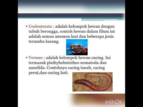 Image of: Platyhelminthes Kingdom Animalia X5 Softilmu Kingdom Animalia X5 Youtube