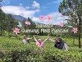 Teawalk di Gunung Mas, Wisata Wajib di Puncak dijamin Seru