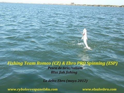 Fishing team romeo cz ebro pro spinning esp bluefish for Delta pro fishing