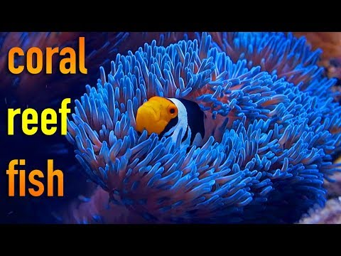Reef Life is Awesome 4K 2017 Montage
