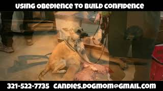 Building Confidence Using Obedience | Amazing New Orleans Dog Trainer