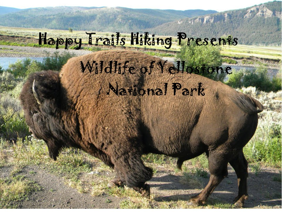 Yellowstone National Park Wildlife Park Travel Review