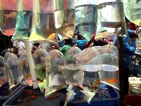 Mirza Galiff Street Aquarium Fish Market Kolkata West Bengal Youtube
