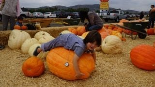 Best Pumpkin Patch reviewed by ToTMaMa:  Underwood family farms