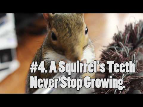 TOP 7 AMAZING FACTS ABOUT SQUIRRELS !!