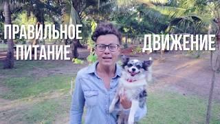 Ожирение у собак: как похудеть собаке? | Часть 4 | Догмама
