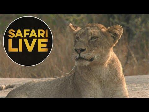 safariLIVE - Sunrise Safari - August 16, 2018