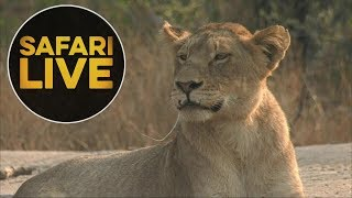 safariLIVE - Sunrise Safari - August 16, 2018