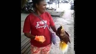 Video burung cendrawasih jinak total. download MP3, 3GP, MP4, WEBM, AVI, FLV Oktober 2018