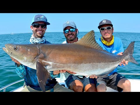 Sight Fishing GIANT Cobia On Bridges And Rays In Virginia