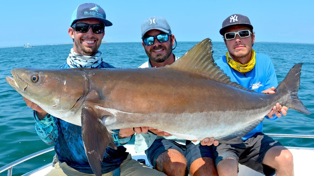 sight-fishing-giant-cobia-on-huge-bridge-in-virginia