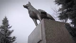 Собаки-герои защищали Сталинград наравне с людьми