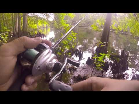 Sharpes Ferry Bridge Fishing (Bass Fishing) Ocala FL