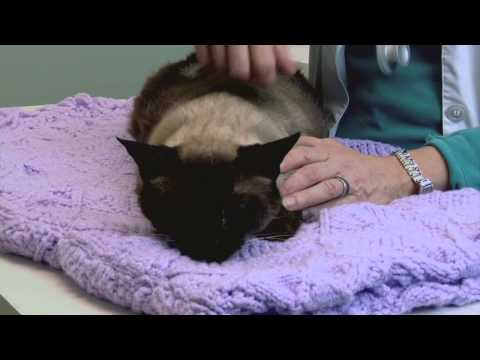 What Does It Mean When a Cat Bites You While Purring? : Understanding Your Cat