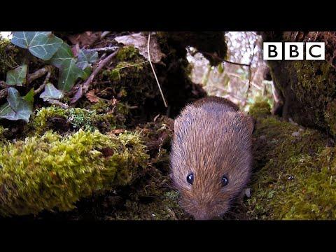 Live Winterwatch: Day 6 🍄 2021 🐿  BBC