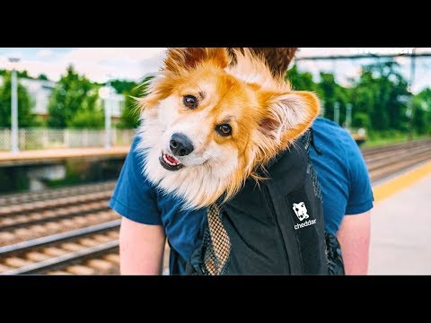 This Lawyer Became a Pet Talent Agent - The Business of Going Viral