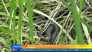 Москвичей атакуют змеи в парках