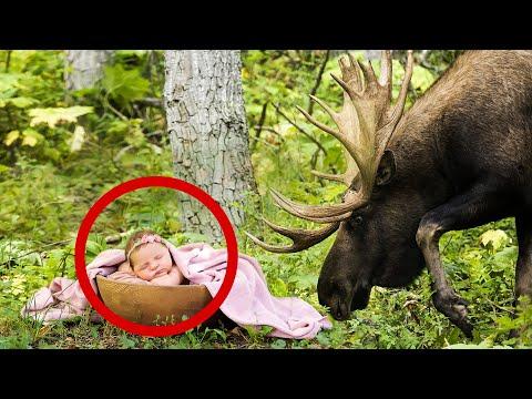 На рогах у лося висела корзина с младенцем, он бежал из леса, окутанного огнем..