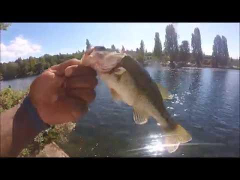 Lake Union Largemouth And Smallmouth Bass Fishing