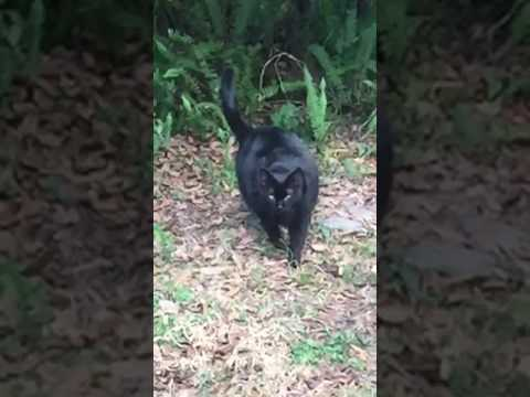 Florida Panther Spotted In Backyard Youtube