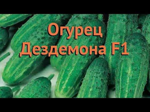 Огурец обыкновенный Дездемона F1 (dezdemona f1) 🌿 обзор: как сажать, семена огурца Дездемона F1