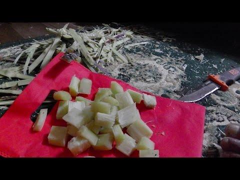 sugarcane massacre | stoners choice in Nepal | director's cut