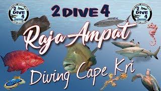 Raja Ampat - Diving Cape Kri with Papua Divers (2dive4)