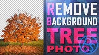 [Belajar Photoshop] Membuang Background Foto Pohon Cara Mudah