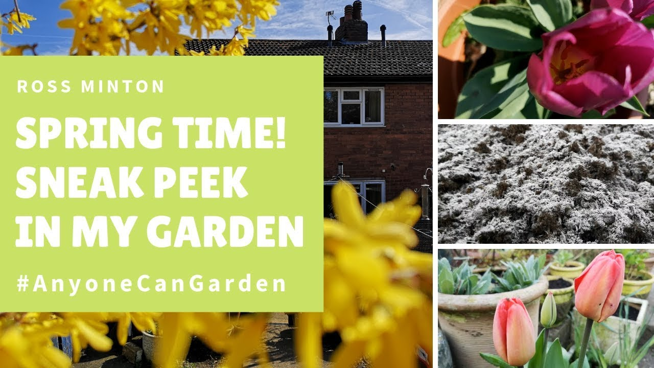 My Garden, New Greenhouse & Allotment Tour. - Early Spring. #1