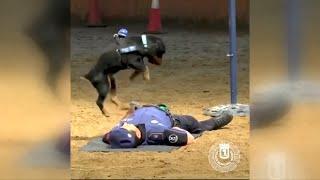 Virales Video: Herzmassage von einem Hund