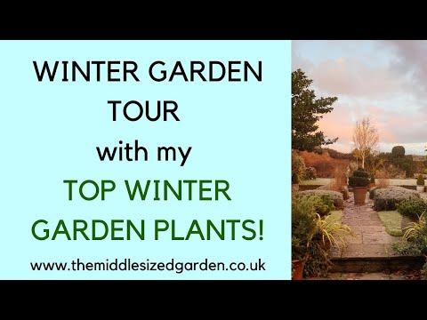 Winter GARDEN TOUR - Plus My TOP WINTER GARDEN PLANTS