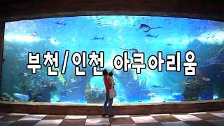 아쿠아리움 브이로그 부천, 인천에서 가까운 웅진플레이도…